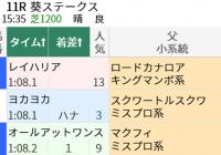 マクフィ産駒の狙い方/今週末(6/5~6/6)の見どころ